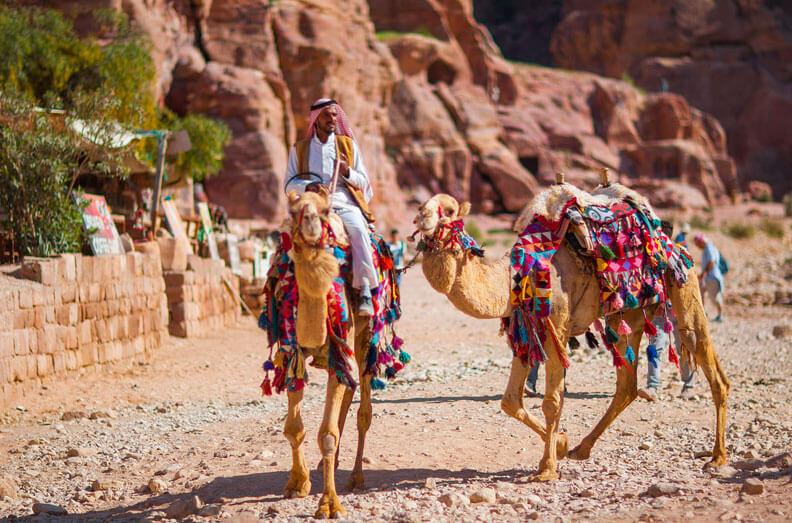 Camels Petra Jordan
